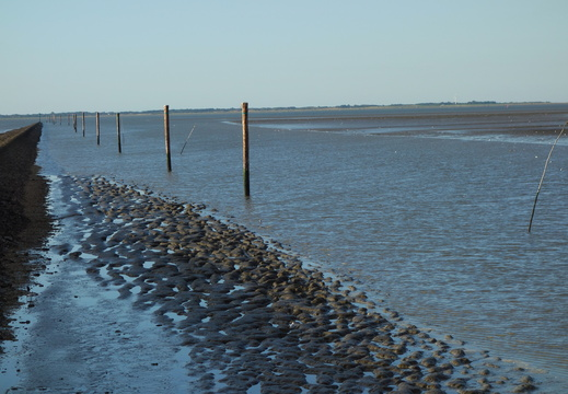 Nordsee-08-2015-070
